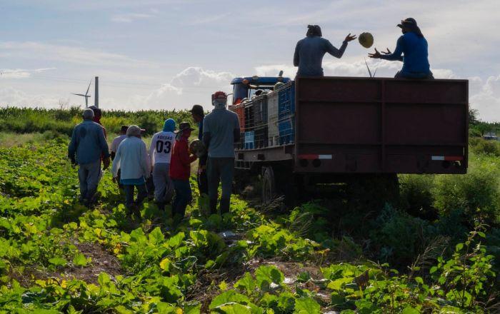 Hondureños llegarán a trabajar en la agricultura boricua
