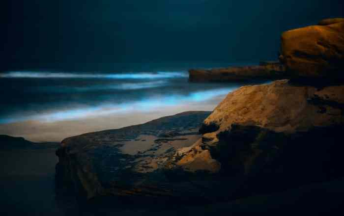 Escapadita por la Isla: Explorando las bahías bioluminiscentes