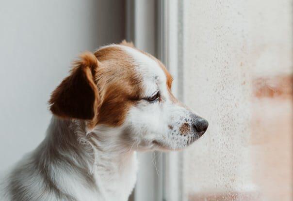 Suspenden la entrada de perros con alto riesgo de rabia