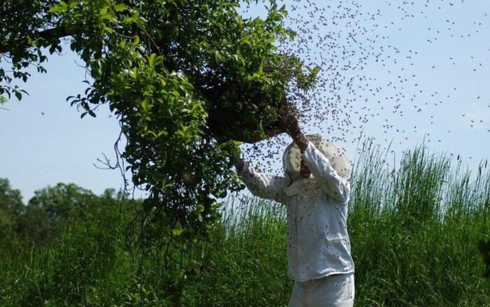 Agricultor muere tras picadas de abejas