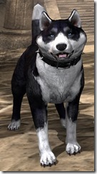 Black Mask Bear-Dog Front