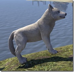 White River Ice Wolf Pup Side