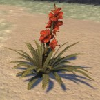 Flower, Grandmother Hibiscus
