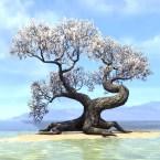 Tree, Tiered White Cherry