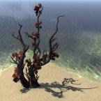 Tree, Twisted Ashflower
