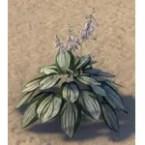 Plant, Blooming White Hosta