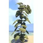 Plant, Towering Jungle Leaf