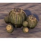 Cactus, Golden Bulbs