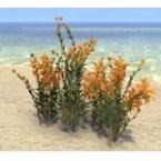 Flowers, Healthy Goldenrod