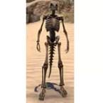 Target Skeleton, Argonian