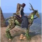 Wild Hunt Horse