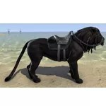 Black Senche-Lion