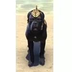 Dwarven War Dog