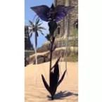 Flower, Healthy Purple Bat Bloom
