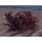 Plant, Lava Brier