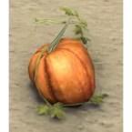 Pumpkin, Frail