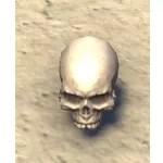 Cranium, Jawless