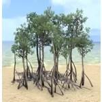 Saplings, Mangrove