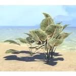 Plants, Amber Spadeleaf Cluster