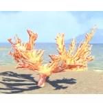 Spiral Skein Coral, Elkhorn