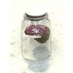 Specimen Jar, Spare Brain