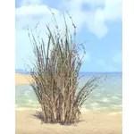 Plant, Bramblebrush