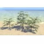 Plant Cluster, Marsh Saplings