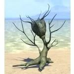 Plant, Marsh Nigella