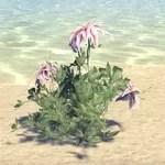 Plant, Star Bloom
