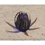 Plant, Marsh Aloe Pod