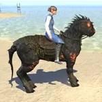 Scorching Horse-Lizard