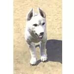 Karth Winter Pup