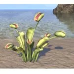 Plant, Flytrap