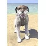 Winterhold Wolfhound