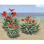 Cactus, Flowering Cluster