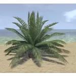 Plant, Cask Palm