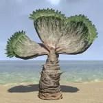 Plant, Desert Fan