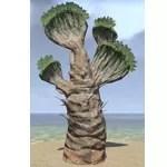 Plant, Tall Desert Fan