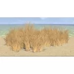 Desert Grass, Patch