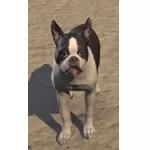 Breton Terrier