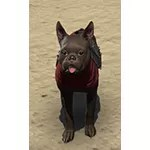 Pact Breton Terrier