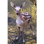 Clearspring Striped Fawn