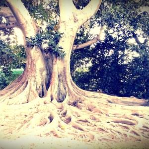 A tree in the garden of Rancho Los Cerritos