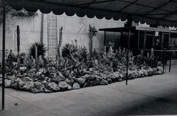 Egyptian Theater Cactus Garden circa 1944