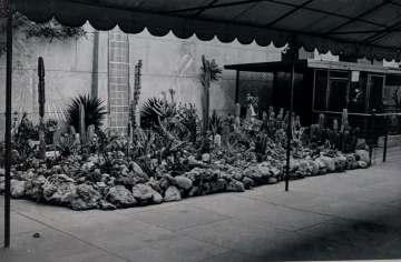 Egyptian Theater Cactus Garden circa 1944