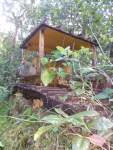 Un bulldozer dans la forêt