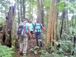 Passage dans la forêt de Frédi