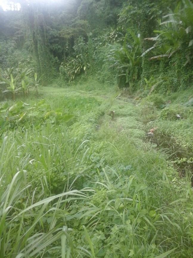 Vue de la trace du parcours Boucle de Doyon_Carangaise