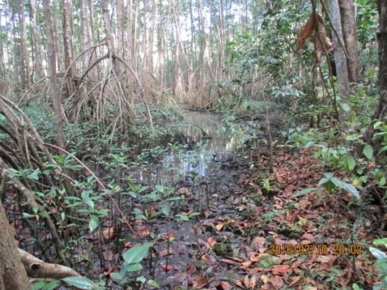La ravine Corneille