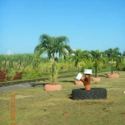 les-palmiers-de-lespace
